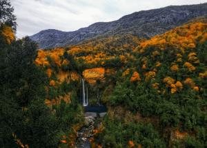 El doctor en Ciencias Naturales Álvaro Gutierrez explica el rol de los bosques para la mitigación del cambio climático y la conservación de las especies de flora y fauna.