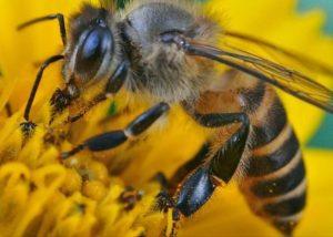 que pasa con las abejas en invierno