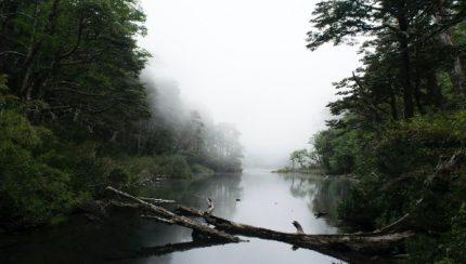 Cómo los bosques regulan el clima