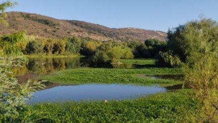 Humedal Urbano en el Cajón del Río Claro talca