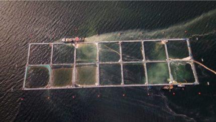 Industria Salmonera: ¿cómo afecta al medioambiente?